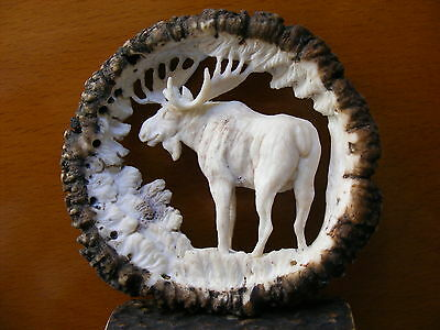 HAND CARVED ANTLERS, MOOSE , decor taxidermy skull hunting