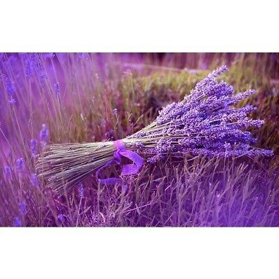 LAVENDER Fragrance Oil for Candles, Soaps, Melts - 10ml to 2.5L