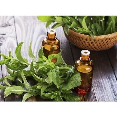 PEPPERMINT & EUCALYPTUS Fragrance Oil for Candles, Soaps, Melts - 10ml to 2.5L