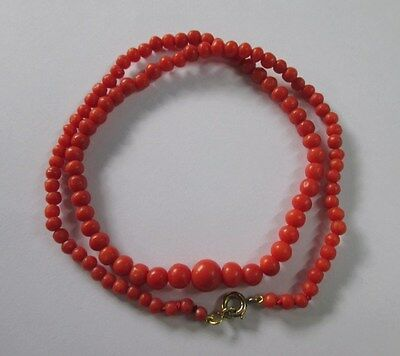 Superbe collier ancien corail rouge de qualité - Fermoir gold or 18 carats 750