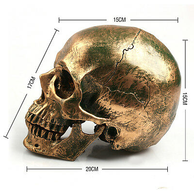 Life Size 1:1 Resin Human Skull Model Medical Teaching Skeleton Head  Bronze