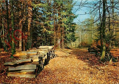 Postcard~ Unknown Location, Logging In A Forest