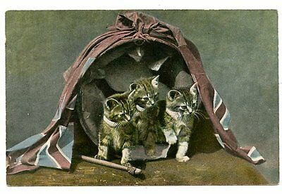 vintage cat postcard trio cats kittens in drum draped w British flag CAT CHARITY
