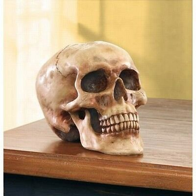 Realistic Human Skull Life Size Replica Gothic Halloween Decoration 1 Size Resin
