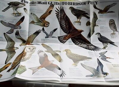 Mail on Sunday RSPB Guide to Garden Birds & Birds of Prey Poster NEW 51 Illust