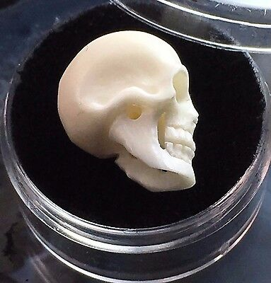 FINE CARVED SKULL PENDANT ARTISAN BEAD 17mm NATURAL BONE ANATOMICAL MINIATURE