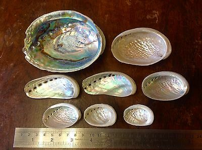 Abalone mother of pearl shells x 8