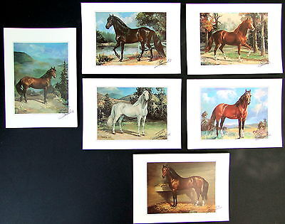 Vintage Collectible Horse Paso Fino Note Cards Set of 12 Art Signed Todd Daniels