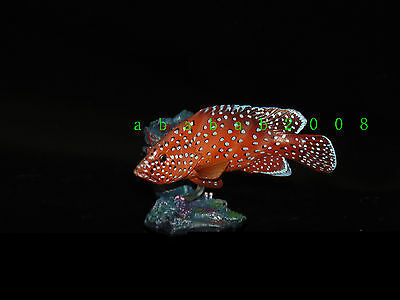 Yujin Marine fish figure gashapon Part.1 gashapon - Coral Hind (one figure)