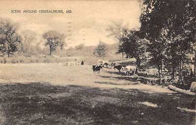 Federalsburg Maryland Cow Pasture Scenic View Antique Postcard K66973