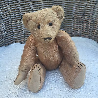 Rare Antique STRAUSS Teddy Bear 1907 Ken Yenke Appraised - Old Mohair American