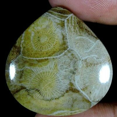 57.05cts NATURAL SUPERIOR DESIGNER MOROCCO FOSSIL CORAL HEART CABOCHON GEMSTONE