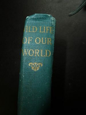 Book Vintage - Wild Life of Our World