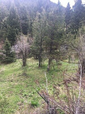RARE MONTANA PROPERTY--- Rocky Mountain patented placer mining claim! BARE LAND