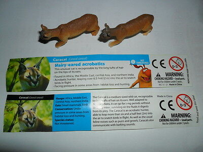 Yowies Brand New *yowies Are Back , * Caracal * + 2 X Variation Papers