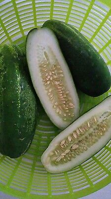 Seeded Cucumbers grown naturally approximately 500g alkaline/electric foods