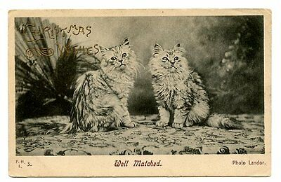 Landor vintage cat postcard longhaired twin cats Well Matched - Christmas wishes
