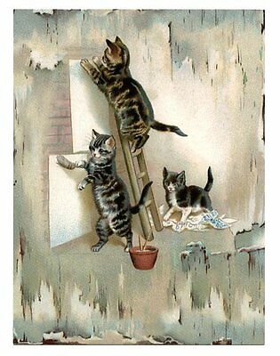 modern cat postcard Maguire tabby cats put up signs posters