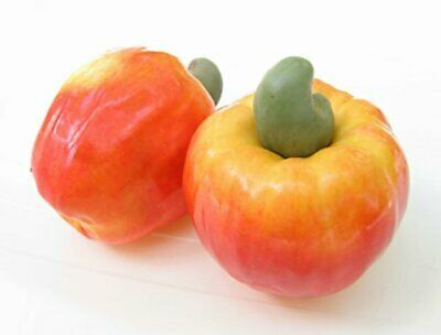 12 Cashew Nut Apple Seeds, 100% Organic Anacardium Occidentale,Rare Tropic Fruit