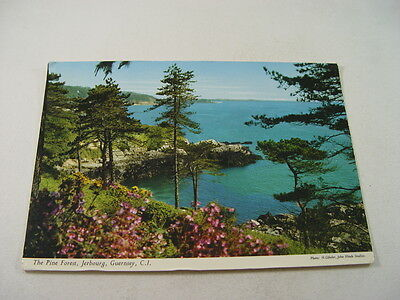 OZ1466 - Postcard - The Pine Forest, Jerbourg, Guernsey 1979