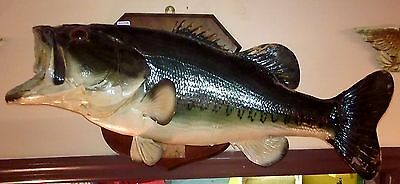 Vtg Large Mouth Bass Fish Mount 11 Lb 1 Oz Real Bass Taxidermy Large Fish Mount