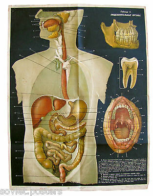 Vintage Medical Anatomy Soviet School Educational Poster  Human Digestive Organs