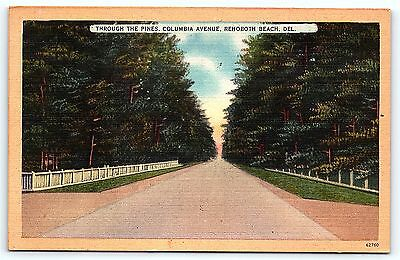 Postcard DE Rehoboth Beach Through the Pines Columbia Avenue Linen  D10