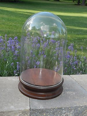 "Vtg Glass Dome Store Display Case Wood Base 15"" Doll Clock Taxidermy Collection"