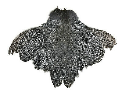 1 Piece  - High Quality Guinea Fowl Natural Polka Dot with Wing Complete Pelt Fe