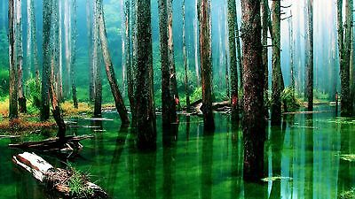 Green Forest Rain Jungle Mountains High Quality wall Art poster Choose your Size