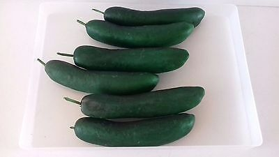 Zucchini Or Courgette, Artificial Vegetables, Vintage Foam