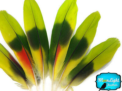 4 Pieces Lime Green Red two tone Amazon Parrot Wing Feathers Naturally Molted
