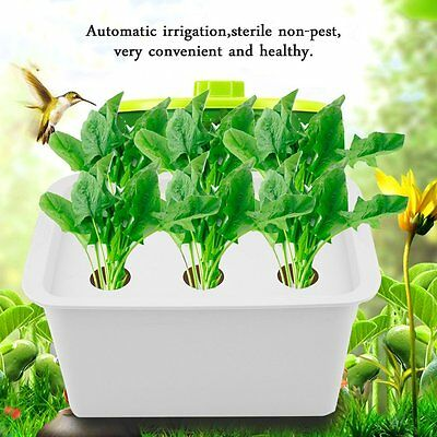 6 Holes Plant Site Hydroponic System Grow Kit Bubble Indoor Garden Cabinet Box #
