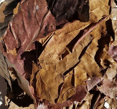 "10 grams mixed Indian almond leaves 4-8"" for shrimps betta tropical fish"