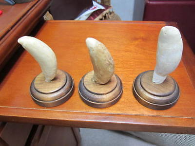 Replica Faux Whale Tooth Lot Of 3 See Descriptions For Details