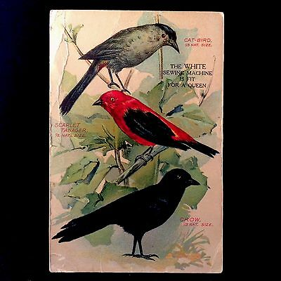 White Sewing Machine Company Trade Card 1880s Birds Scarlett Tanager Crow Cat