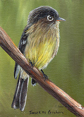 Black Capped Flycatcher ACEO Bird Wildlife Original ACEO Acrylic Painting
