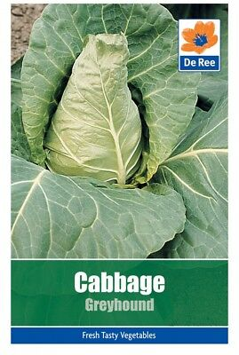 Cabbage Greyhound Vegetable Seeds (approx. 230 seeds)