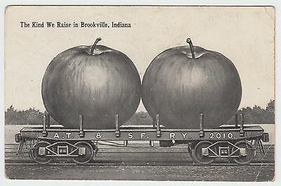 Brookville IN Indiana Antique Postcard Exaggeration Apples Railroad Freaks Ad