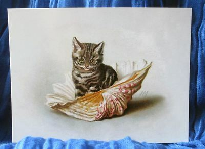 modern cat postcard adorable Maguire tabby cat kitten sat in big shell