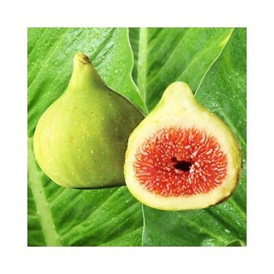 ITALIAN SUMMER FIG Fragrance Oil for Candles, Soaps, Melts - 10ml to 2.5L