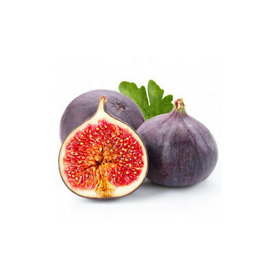 FIG Fragrance Oil for Candles, Soaps, Melts - 10ml to 2.5L