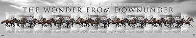 Black Caviar A Wonder From Down Under Limited Edition Print Nolen Moody