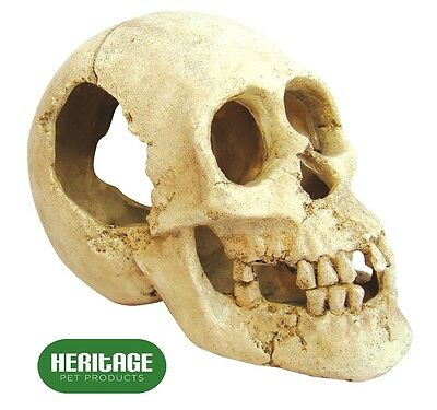 Heritage BM109 Large Cracked Human Skull Ornament Fish Tank Aquarium Decoration