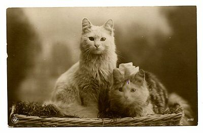 vintage cat postcard real photo beautiful longhaired cats pair in basket 1917