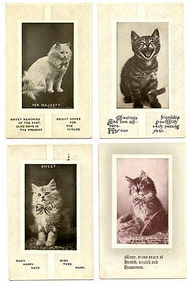 lot of 4 vintage cat postcards laughing cat Beauty Her Majesty Sweet kitten