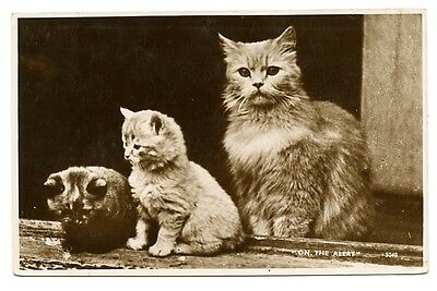"""vintage cat postcard real photo gorgeous trio of cats watch """"On the Alert"""""""