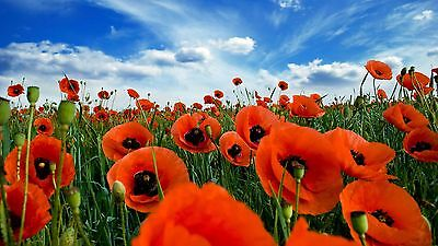 poppies, field, sky, clouds,High Quality wall Art poster Choose your Size