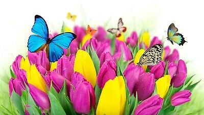 tulips, flowers, butterflies, High Quality wall Art poster Choose your Size