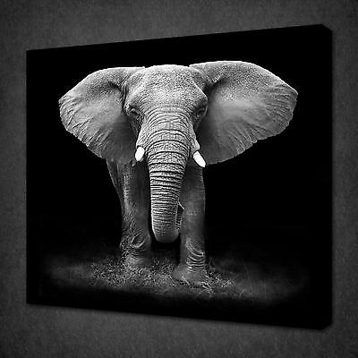 Uk Black And White Elephant Animal Design Canvas Print Wall Art Picture Unframed